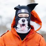 Collie facemask with ears